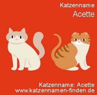 Katzenname Acette - Katzennamen finden