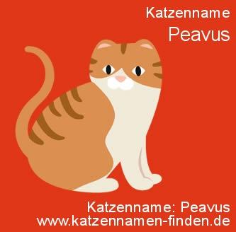 Katzenname Peavus - Katzennamen finden