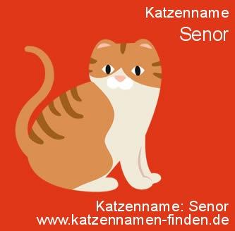 Katzenname Senor - Katzennamen finden
