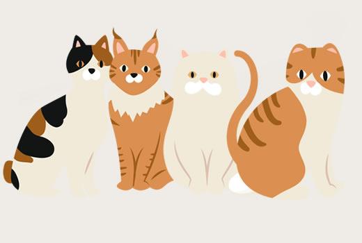 Katzen Rassen Datenbank